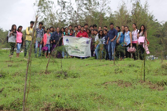 Palghar tree plantation 14